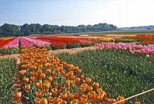 טיול משפחות להולנד ובלגיה