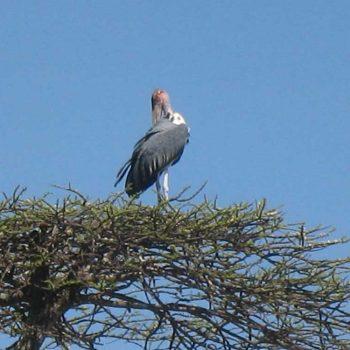אתיופיה, אגם לנגנו