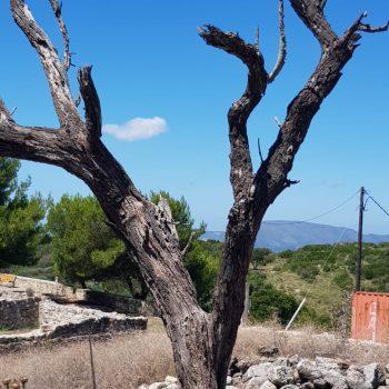 האי זקינטוס יוון