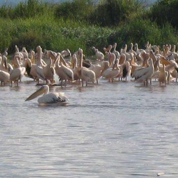 אתיופיה-222-עופות-צאמו